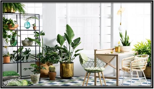 houseplants-guide