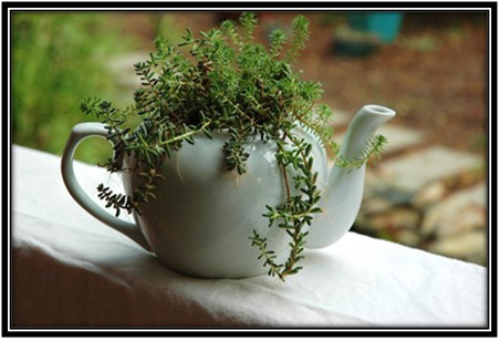 Old Tea Pot Plants Home Decor Ideas