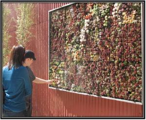 Choosing-a-wall - Home Decor Ideas