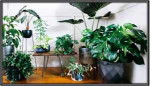 Bring more houseplants into your home