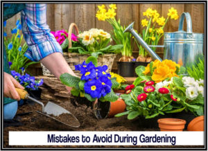 5 Silly Mistakes to Avoid During Gardening